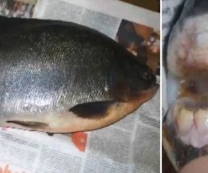 Rămâi interzis cât ai zice dantură: Un rus a capturat peștele cu dinți de om!