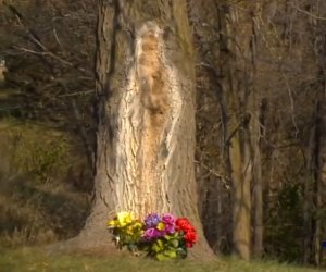 MINUNE Dumnezeiască! Fecioara MARIA a apărut pe trunchiul unui copac! Credincioșii au rămas înmărmuriți!