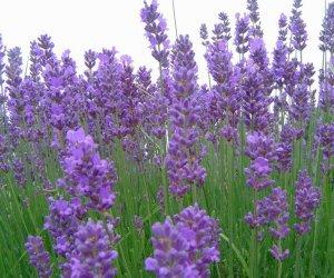 CINCI plante VINDECĂTOARE pe care trebuie să le ai în CASĂ